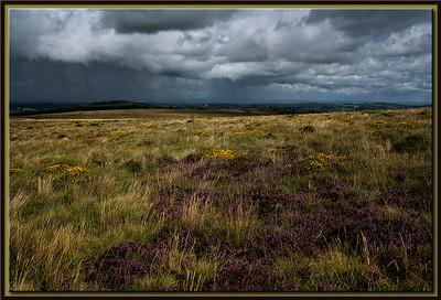 Moorland Herb before Rain