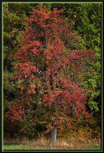 Birne im Herbst