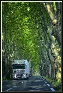 Verkehr unter der Platanen-Allee, Provence
